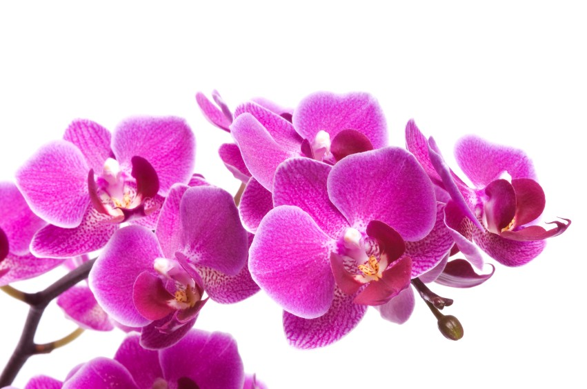 orchidee s