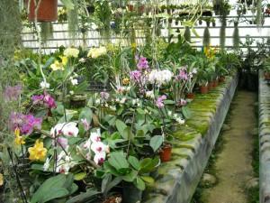 serre à orchidée