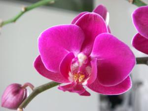 combien coute une orchidée