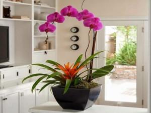 lumière orchidée