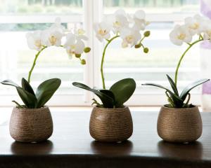 où installer une orchidée