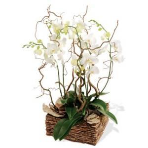 offrir orchidée