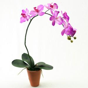 offrir une orchidée