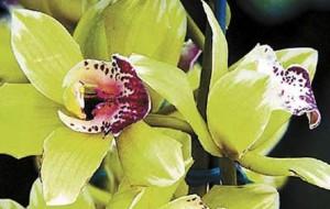 orchidée Nongke Shenzhen