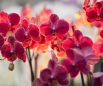prix d'une orchidée